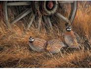 Птицы и павлины Куропатки в траве