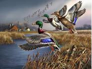 Рыбалка и охота Охота на уток