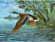 Птицы и павлины Утка над рекой