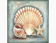 Морские пейзажи Морская ракушка
