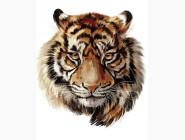 Животные и рыбки Царственный тигр