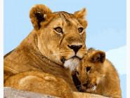 Животные и рыбки Львица с малышом