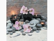 Цветы, натюрморты, букеты Розовые орхидеи