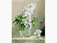 PGX21177 Картина раскраска Белая орхидея