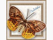 Бабочка из бисера на пластиковой основе Eurybia Juturna
