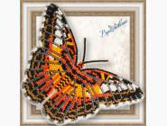 Бабочка из бисера на пластиковой основе Партенос Сильвия