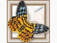 Вышивка бисером Бабочка из бисера на пластиковой основе Dysphania militaris
