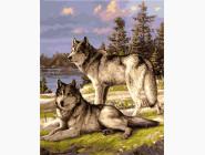 Животные и рыбки Пара волков