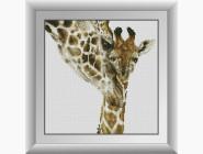 Материнская любовь (жирафы)