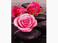 Розы на камнях