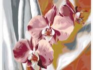Красочные орхидеи