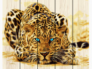Голубоглазый леопард