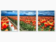 Триптих Поле тюльпанов