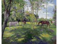 Пастбище лошадей