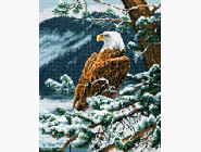 НикиТошка Гордый орел