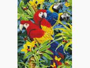 Красочные ара
