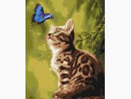 Загадочная бабочка