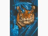 Загадочный тигр