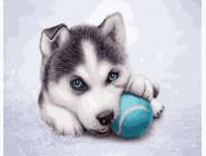 Коты и собаки: картины без коробки Щенок хаски с мячиком