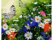 Цветочное поле и бабочки