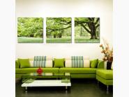MS14057 Картина раскраска Триптих. Зеленое дерево Babylon