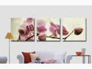MS14067 Картина по цифрам Триптих. Розовые орхидеи Babylon
