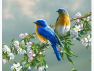 картина по номерам Птички на яблоне