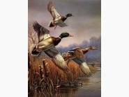 Птицы и павлины Дикие утки