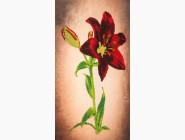 Цветы и натюрморты Вышивка бисером Волшебная страна Красная лилия (FLF038)