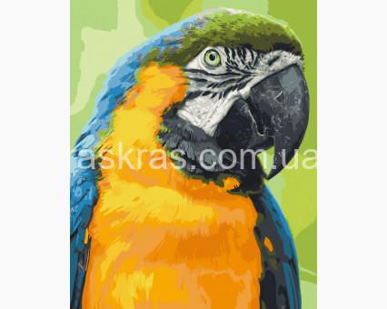 11626-AC картина по номерам Попугай Ара ArtCraft