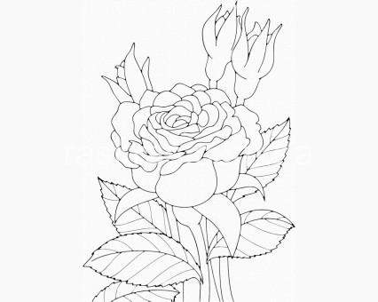 15505-AC Картинки раскраски для детей Роза ArtCraft