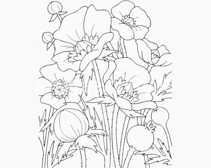 15506-AC Картинки раскраски для детей Маки ArtCraft