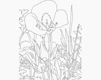 15523-AC Картинки раскраски для детей Ирисы ArtCraft