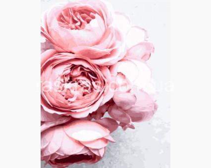 BRM27648 картина по номерам Роза садовая Rainbow Art