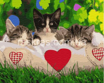 BRM27736 Картина по номерам Трио на подушке