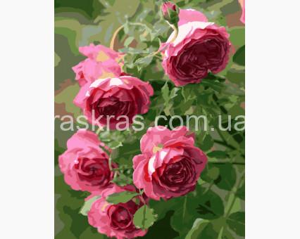 BRM8983 картина по номерам Садовые розы Brushme
