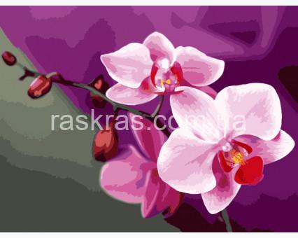 KH1081 картина по номерам Розовые орхидеи Идейка