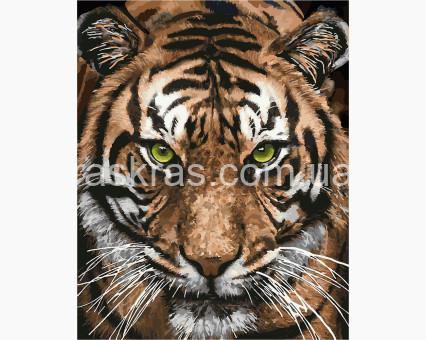 KH4166 Раскраски по номерам Величественный тигр Идейка