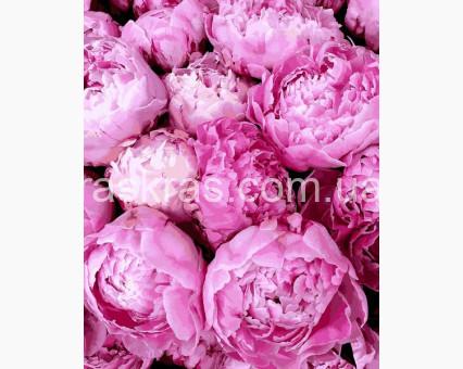 MR-Q2284 картина по номерам Прелесть розовых пионов Mariposa