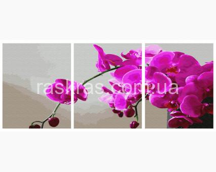 PX5298 картины по номерам Орхидея НикиТошка
