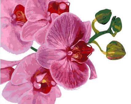 AS0124 Картина раскраска Розовая орхидея ArtStory