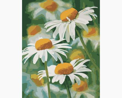 AS0341 картина по номерам Нежные ромашки ArtStory