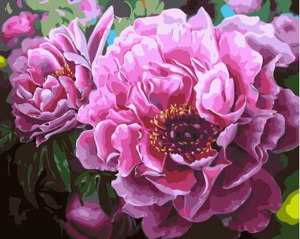 AS0356 картина по номерам Садовые пионы ArtStory