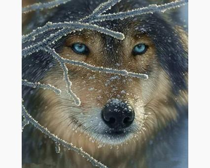 DM-273 алмазная вышивка Взгяд волка Алмазная мозаика