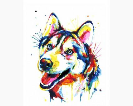 Купить BK-GX25781 Картину раскраска Радужный хаски (Без ...