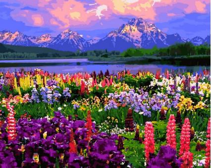 VP1253 картина по номерам Полевые цветы DIY Babylon