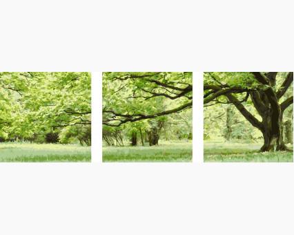 MS14057 картины по номерам Триптих. Зеленое дерево DIY Babylon