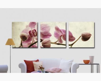 MS14067 картины по номерам Триптих. Розовые орхидеи DIY Babylon
