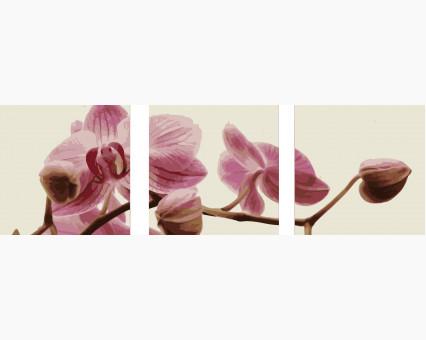 MS14067 картины по номерам Триптих. Розовые орхидеи DIY Babylon фото набора