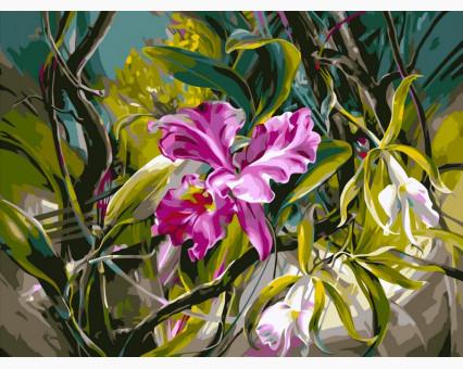 VP101 картина по номерам Прекрасные орхидеи DIY Babylon